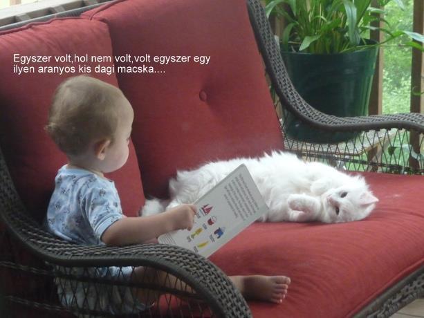 Dagi macska