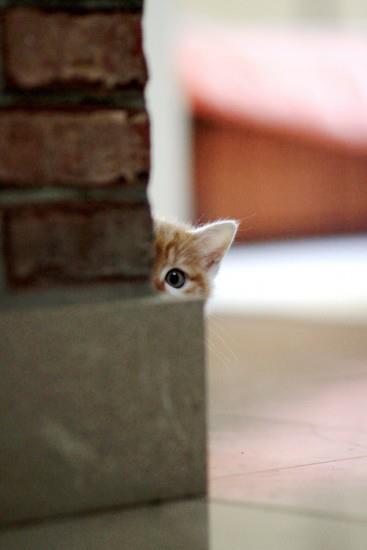 Itt nem láthat meg senki!
