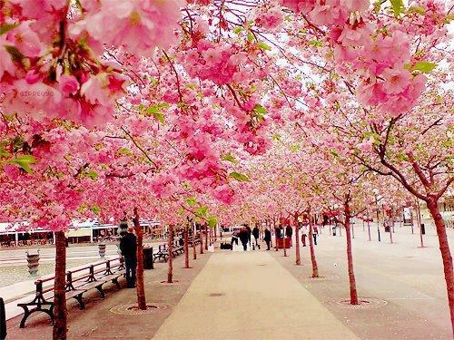 Amikor mindent rózsaszínben látunk