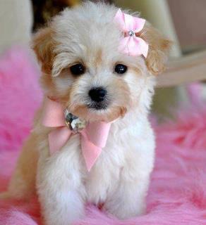 Rózsaszín a kedvenc színem! :-)