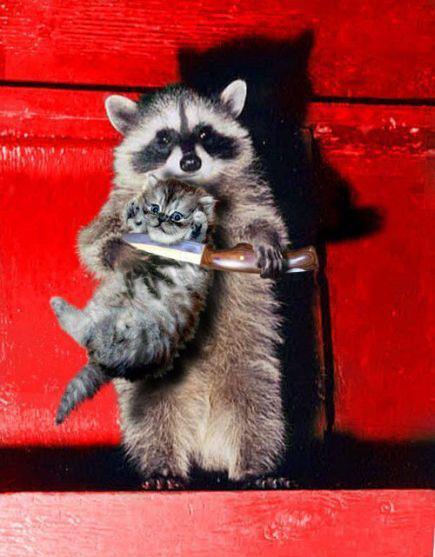 A cicának vége, ha nem adtok enni