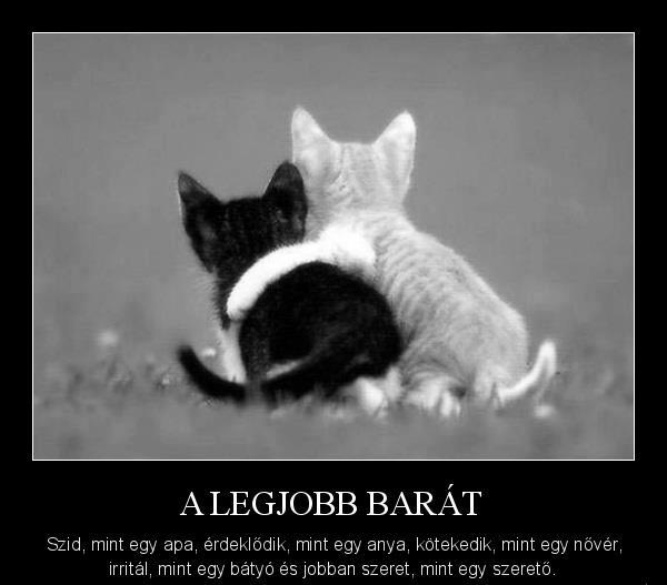 A legjobb barát...