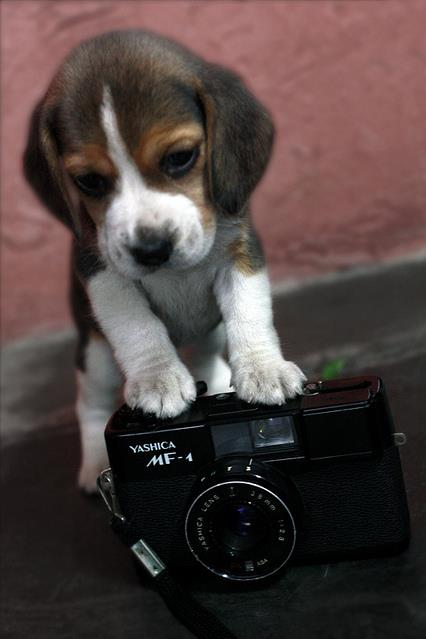 fotogén
