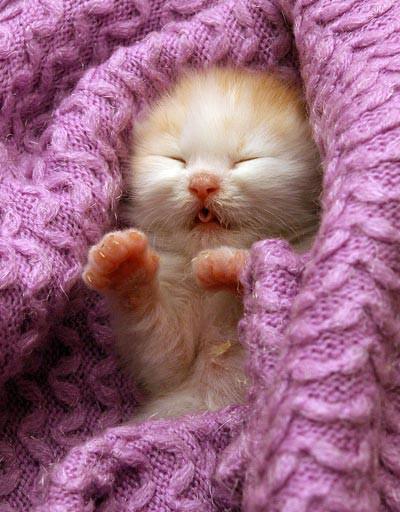 cica baby