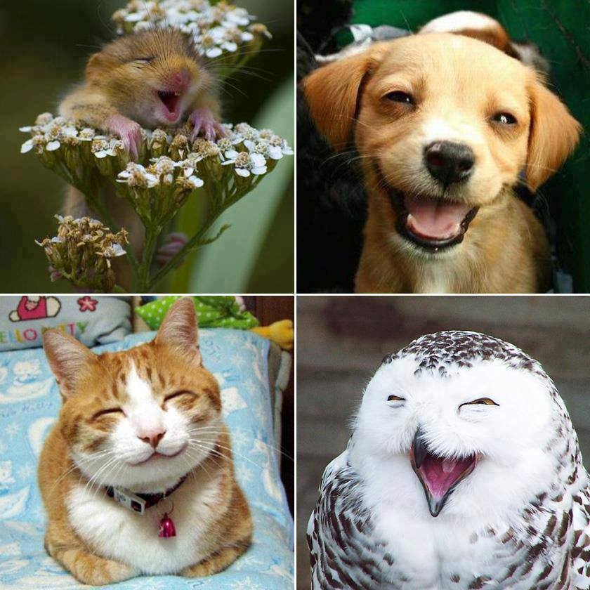 A legtöbb mosolyt egy másik mosoly indítja el