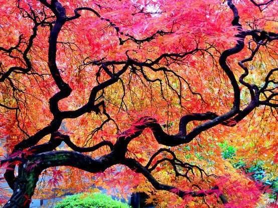 Japán kert Portland-ben