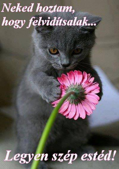 Egy kedves cica