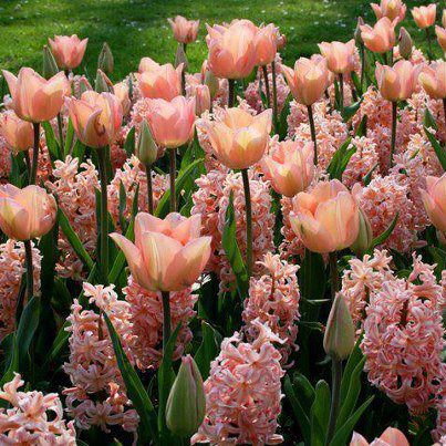 Tavaszi virágözön!