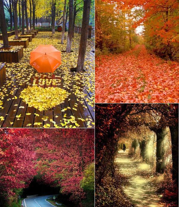 Az ősz hangulata, és gyönyörűsége