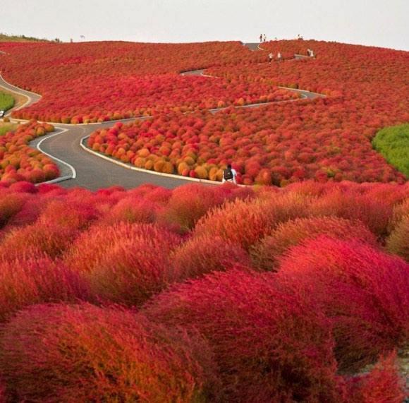 Ilyen Japánban az ősz
