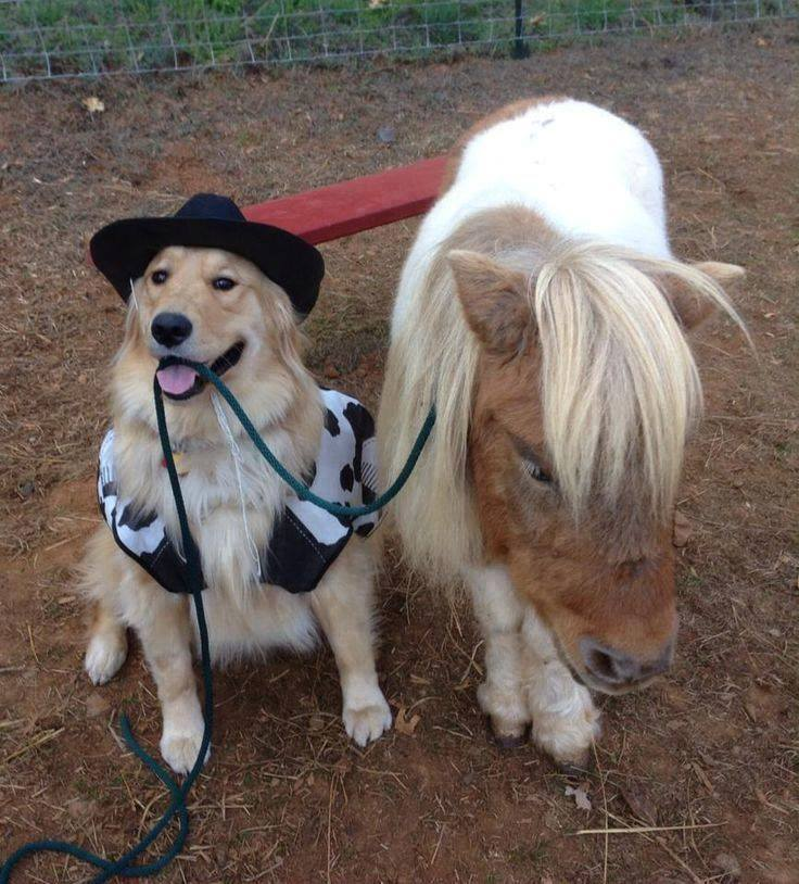 Ő az én lovam