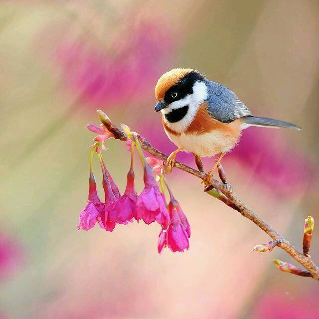 Tavaszi madár