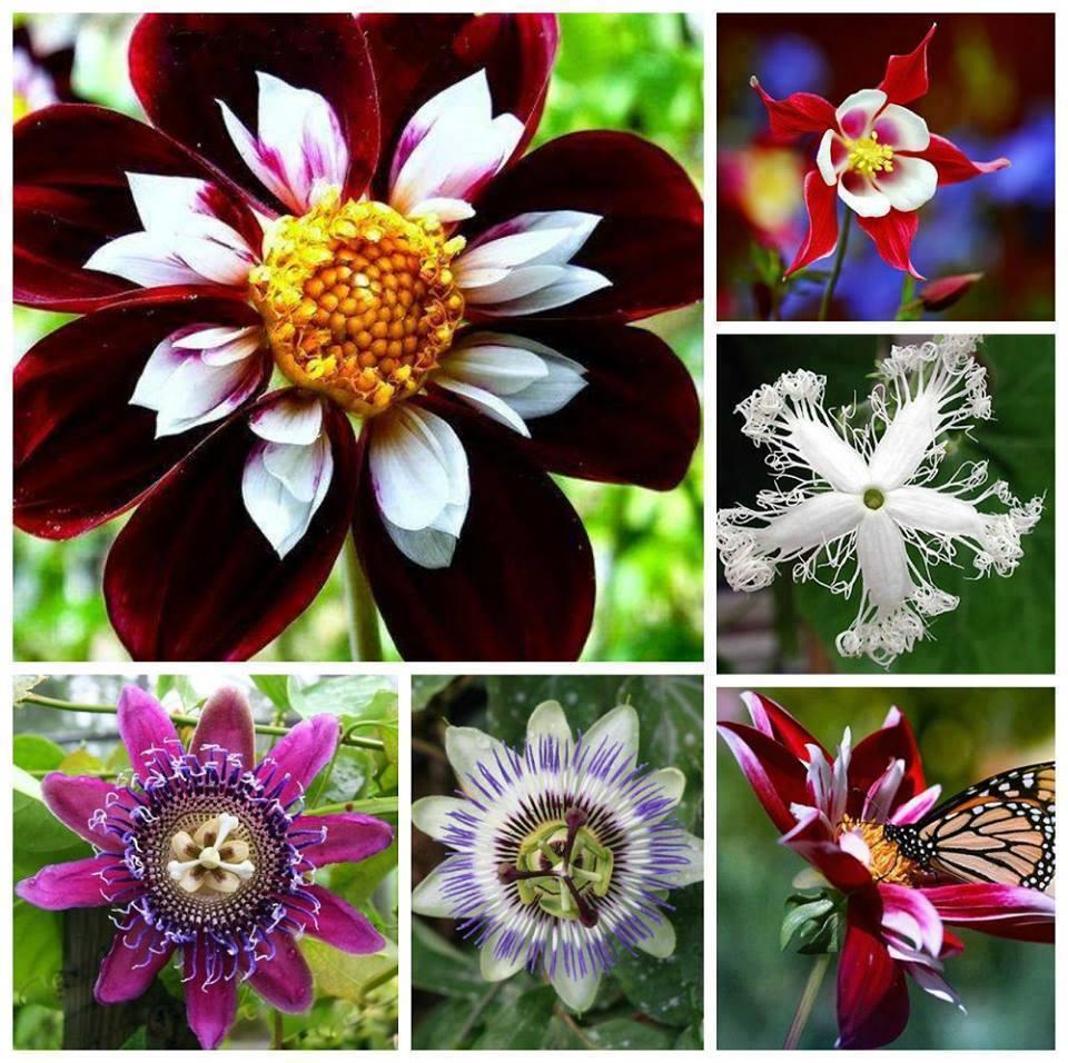 Virág szépségek