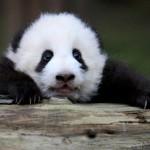 itt vagyok ragyogok a panda maci Én vagyok