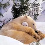 az anya védelmezi a kicsinyét