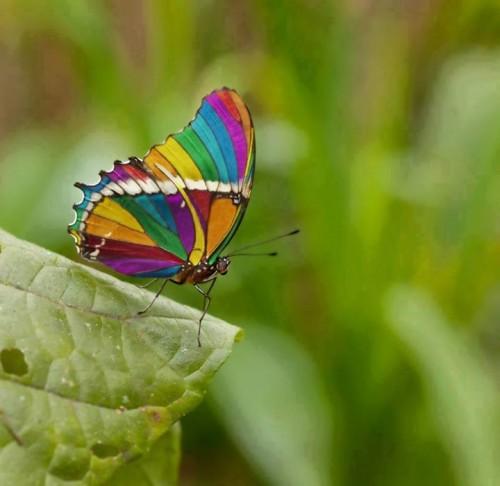 Gyönyörű-színekben