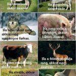 Milyen állat