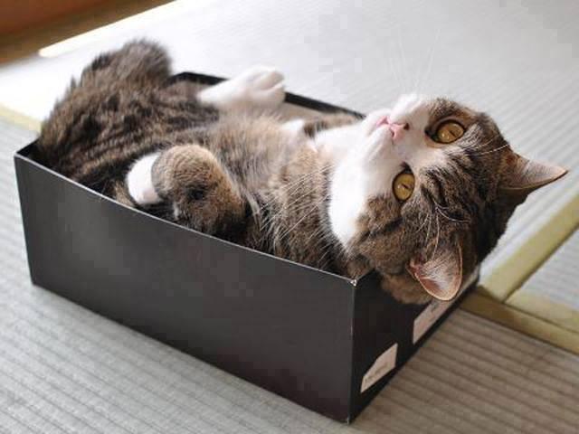 Egy doboz cica