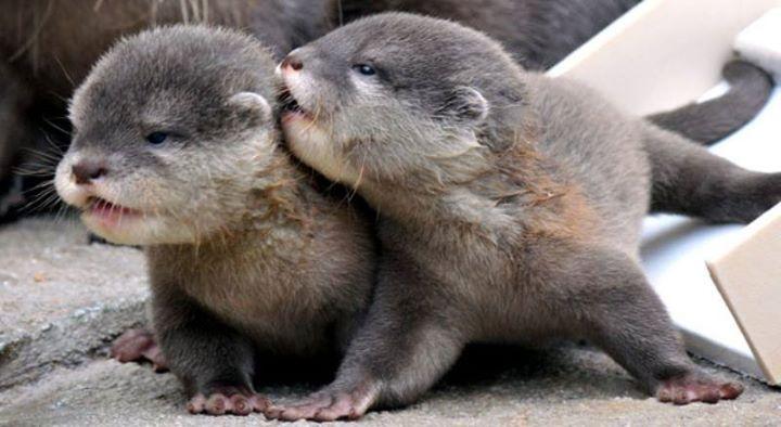 testvéri szeretet